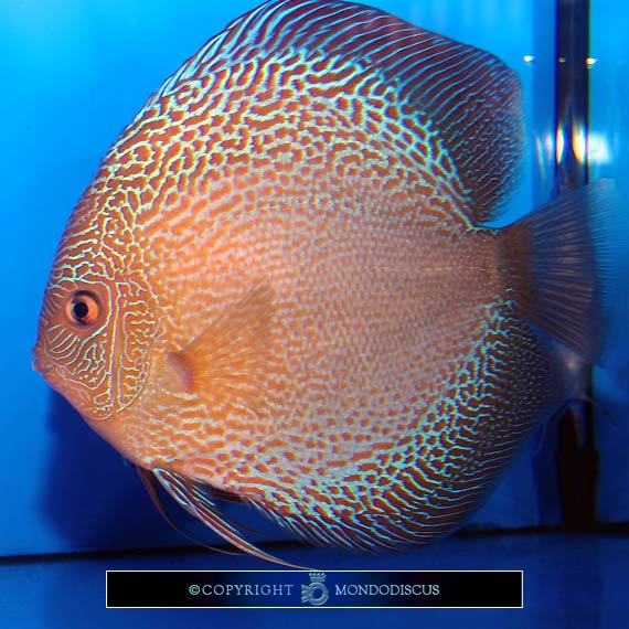 quali sono i pesci magri