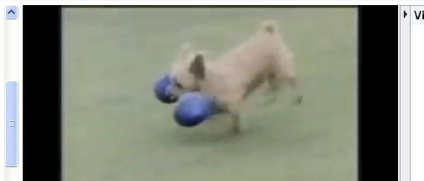 Video divertenti di animali: cani, gatti, cavalli, oche e tanti altri
