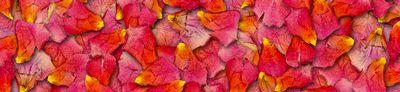 petali-rosa