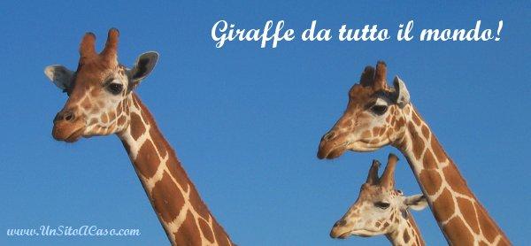 Disegnate una giraffa e speditela!!!
