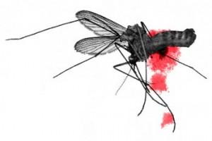 uccidere-zanzare