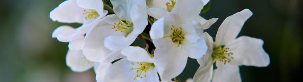 Piante e fiori stabilizzati